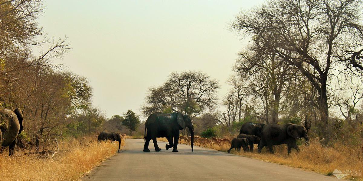 Um verdadeiro guia para quem vai fazer safári no Kruger National Park. Como chegar, melhor época, como funciona, quais as regras e muito mais!