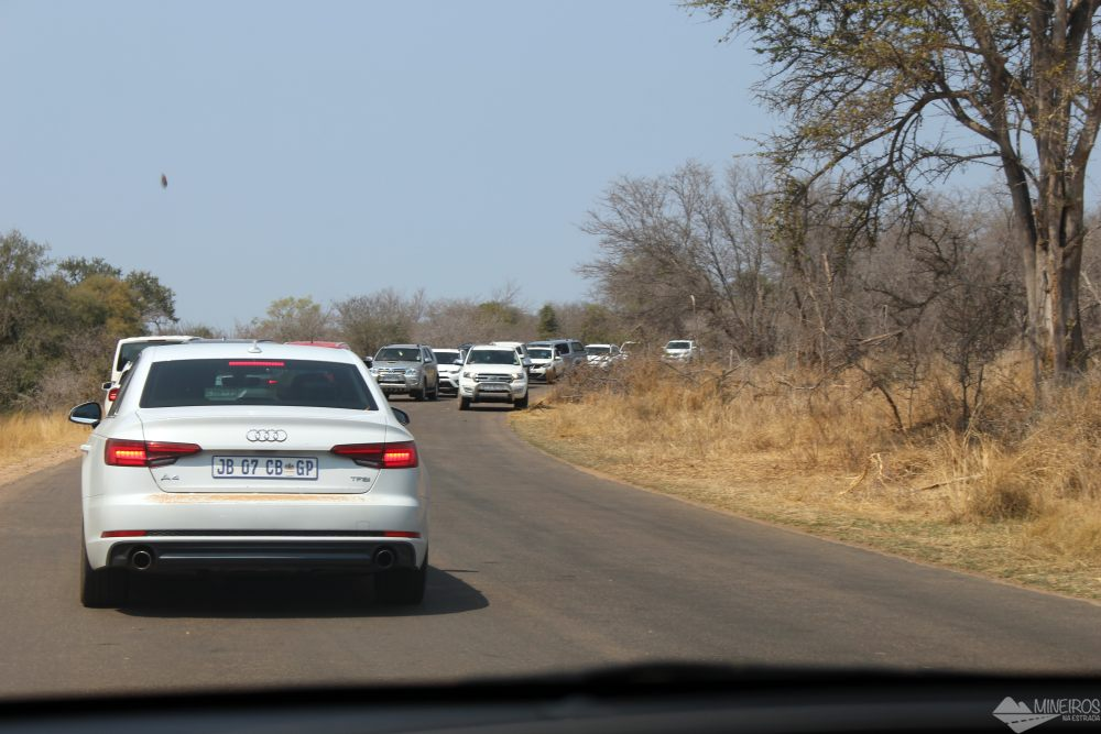 Congestionamento na parte sul do Kruger Park