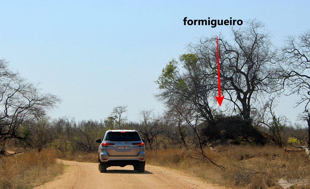formigueiro no Kruger Park