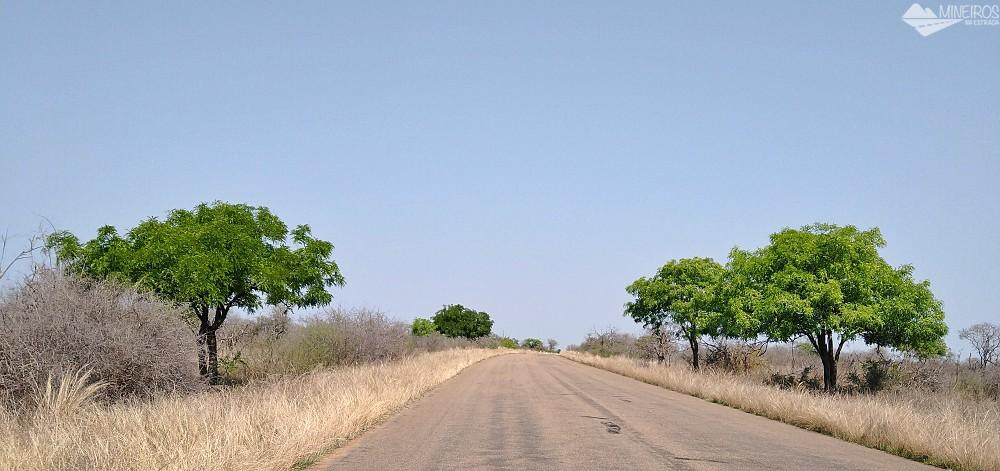 vegetação kruger national park