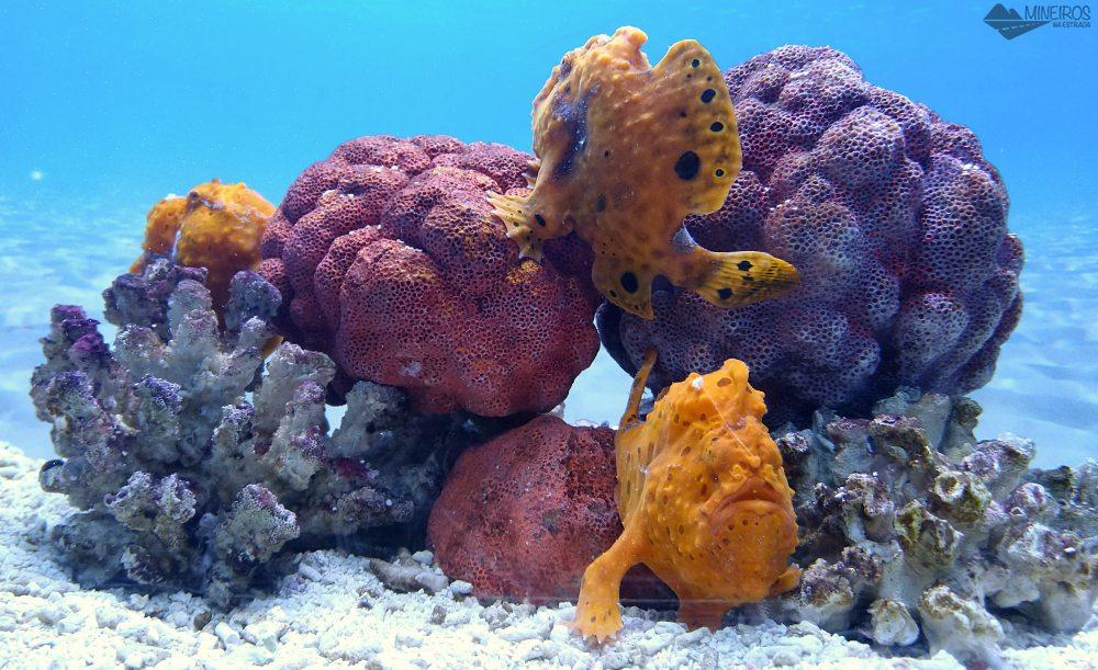 o que fazer em cape town aquario two oceans