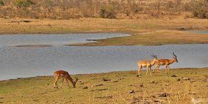 Como foram nossos 4 dias de safári por conta própria no Kruger National Park – Dia 3